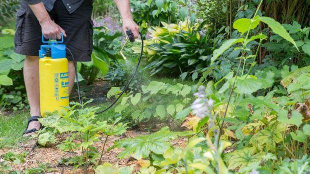 Spray horsetail broth in the garden