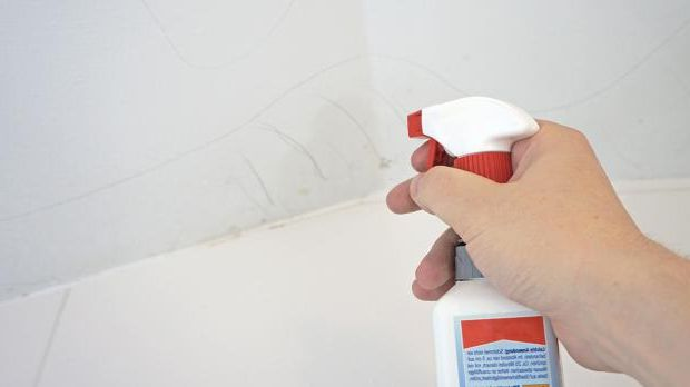 Spray mold stains with Schimmel-Ex