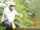 gardening pesticide